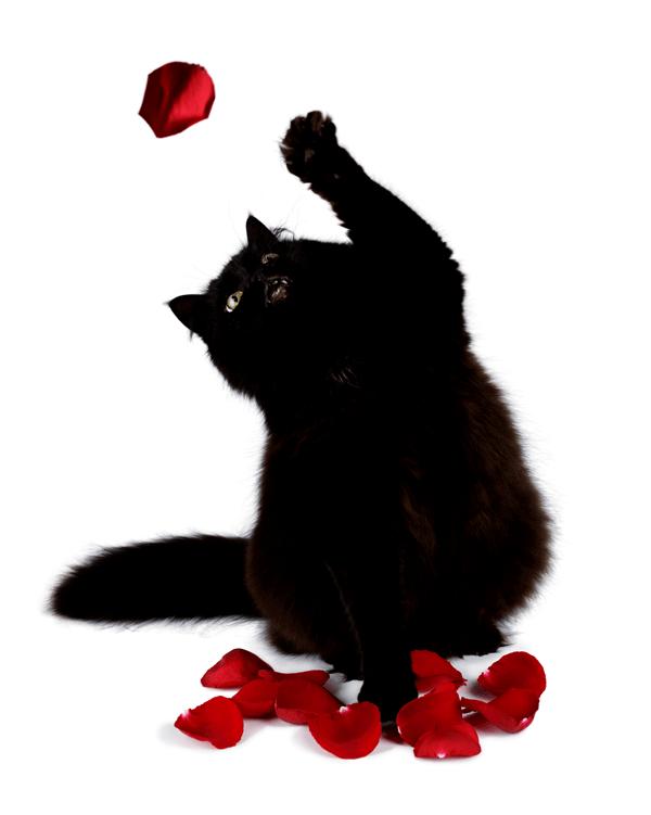 rich black true black print indesign cat
