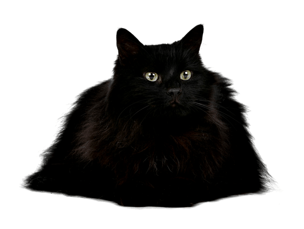 rich black true black print indesign cat