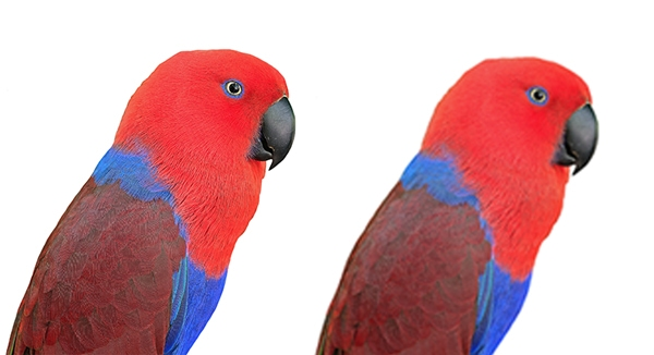 pixelated parrot print indesign