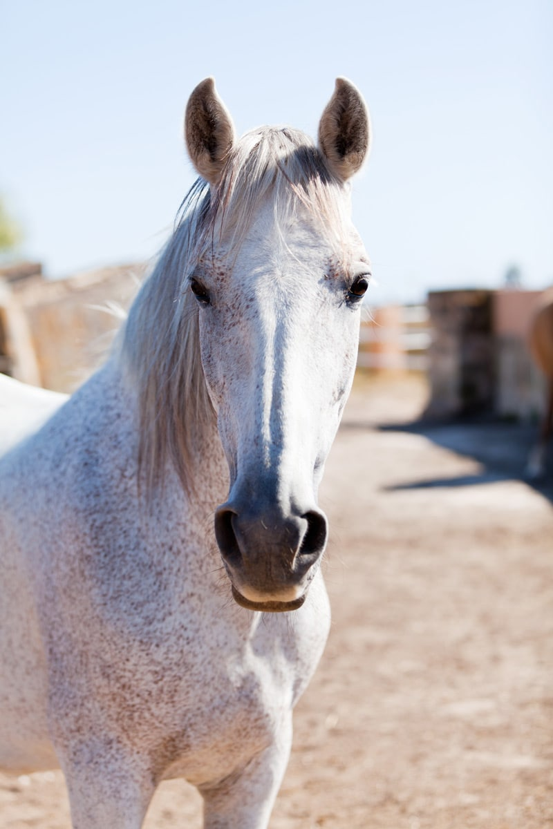 working with photos layouts indesign photography graphic design horse
