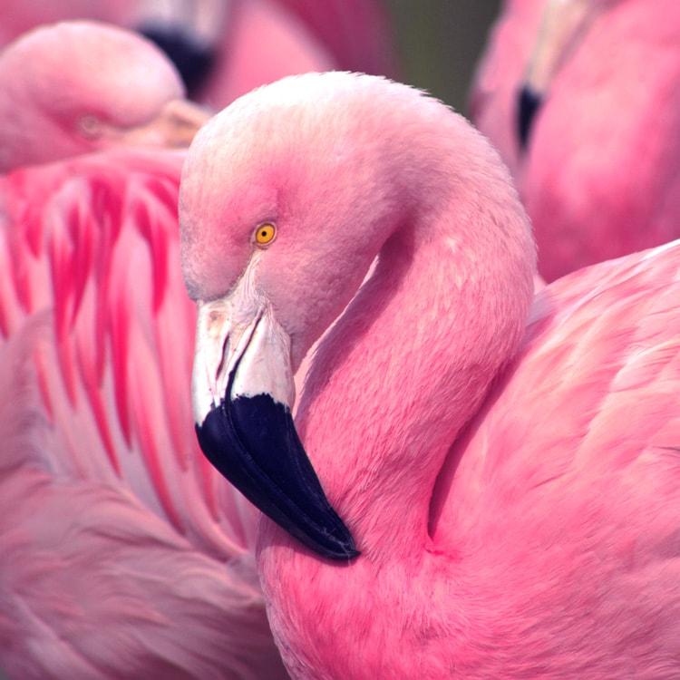 collage effect multiple frames single image indesign effect flamingo