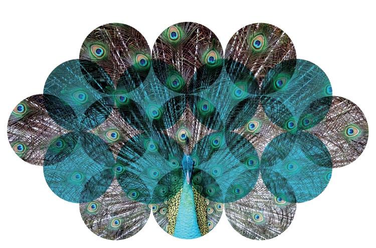 collage effect multiple frames single image indesign effect