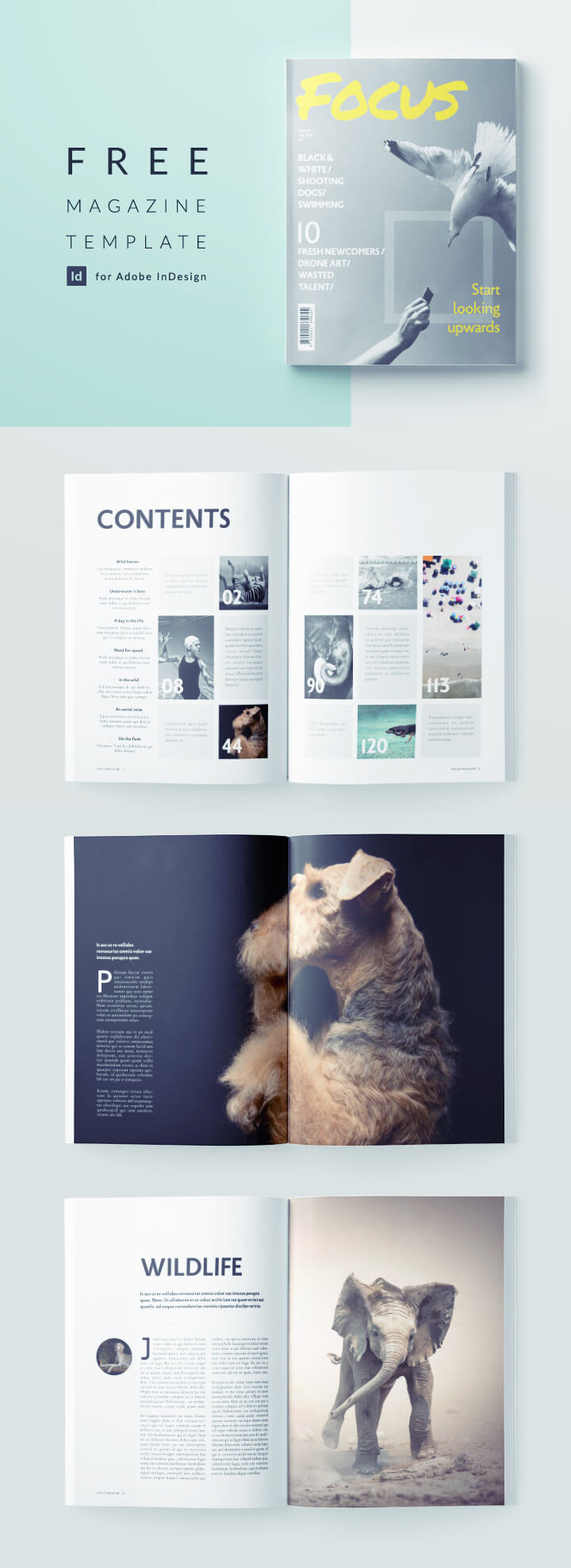 free indesign magazine template - download this professionally designed template for an indesign photography magazine